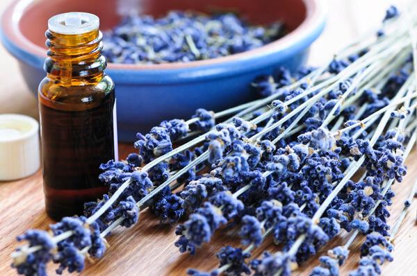 lavender-essential-oil (1)