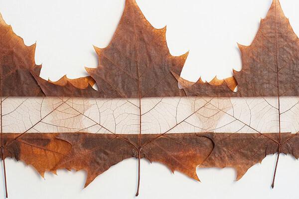 autumn-leaf1 (1)