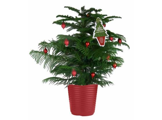 xmas-tree4.full (1)