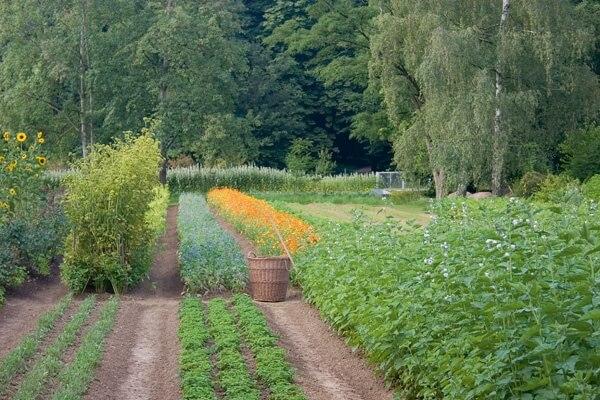 wala-herb-garden.full (1)