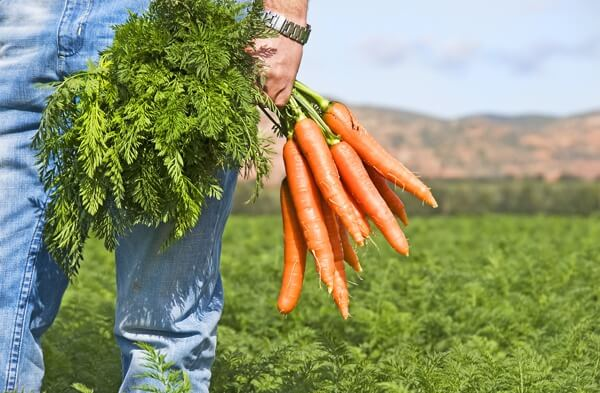 carrot-man-field.full (1)