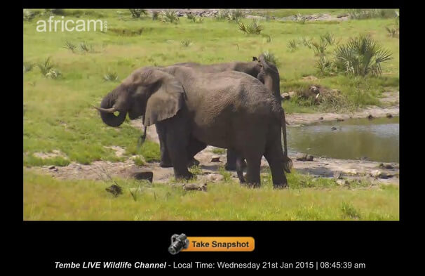 слоны.full (1)