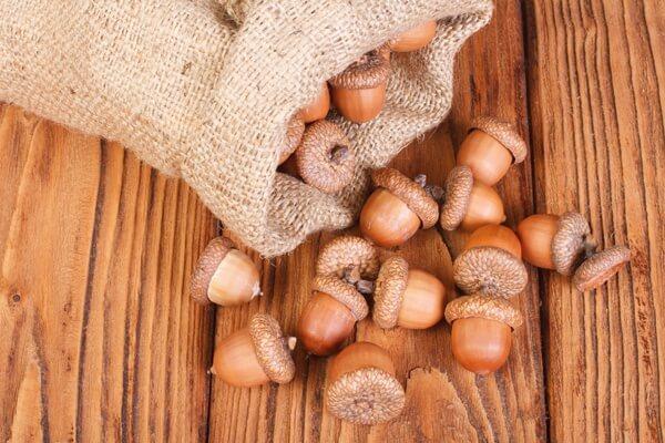 acorns.full (1)