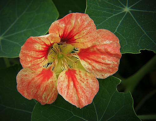 съедобные цветы топ-10