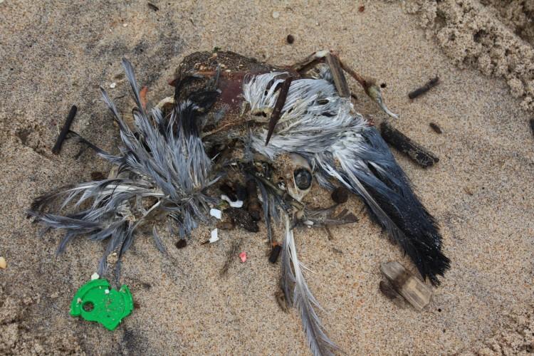 птица съела пластик