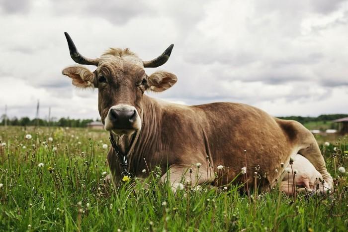 животные с фермы 2