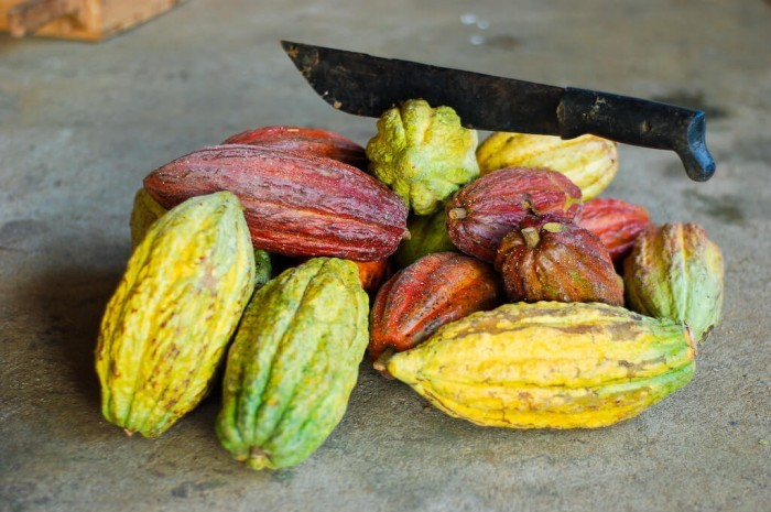 Какао бобы: польза и вред сырья для производства напитка, полезно или вредно какао