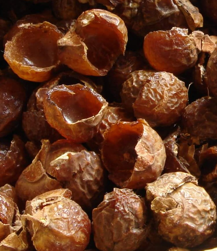 soap nuts 5