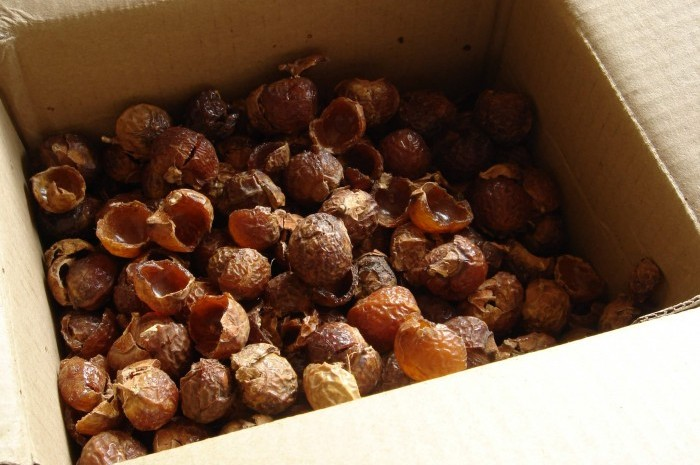 soap nuts 4 (1)