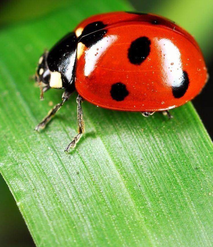 ladybug-9