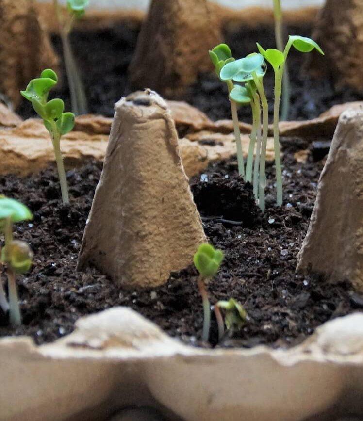 seeds- Изображение ivabalk с сайта Pixabay