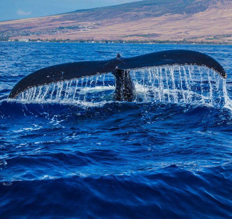 реакция китов на судовой шум Фото Дэниела Росса из Pexels