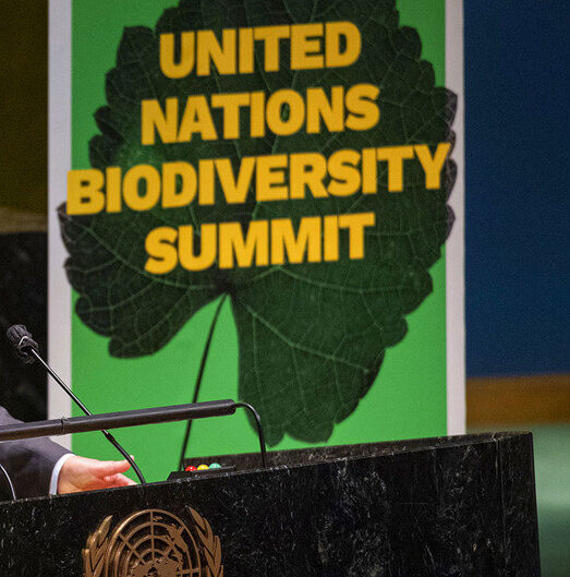 ООН саммит по биоразнообразию