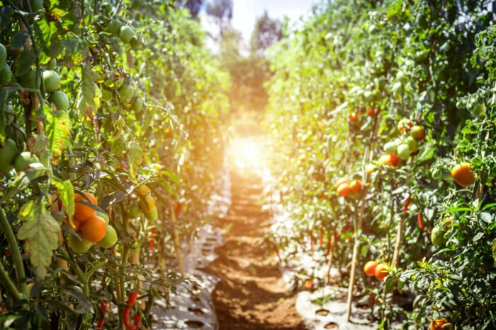 сельхоз политика ЕС pexels-artem-beliaikin