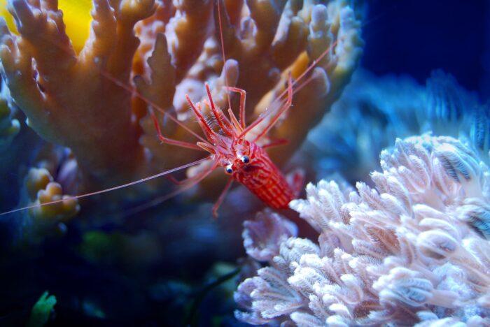 креветки экологичность coral