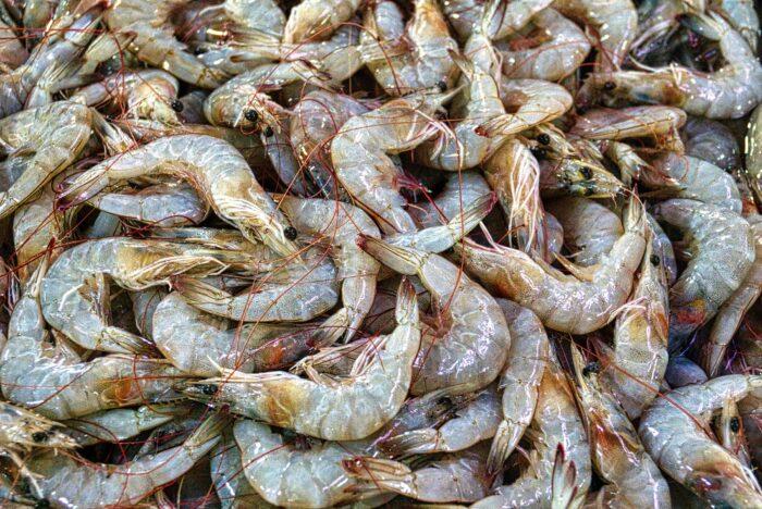 pexels-tom-fisk-креветки, экология