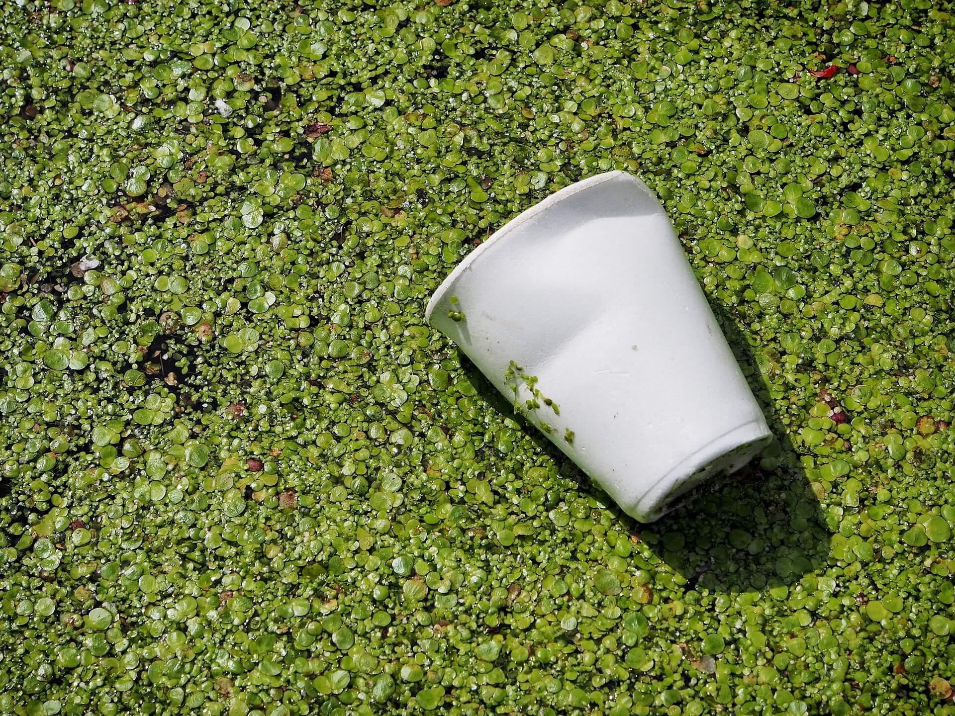 пластик биоразлагаемый Изображение Andrew Martin с сайта Pixabay