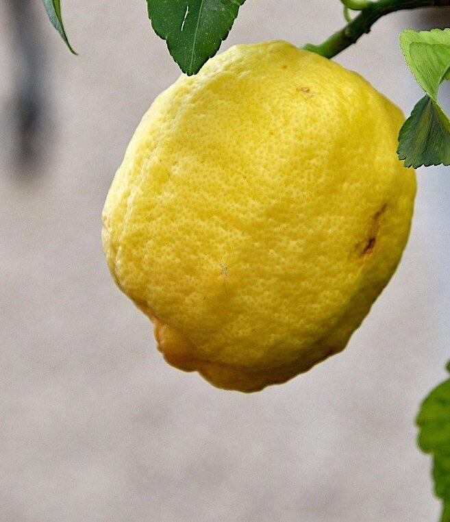 Лимон Изображение Jacques GAIMARD с сайта Pixabay