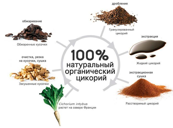 Производство цикория