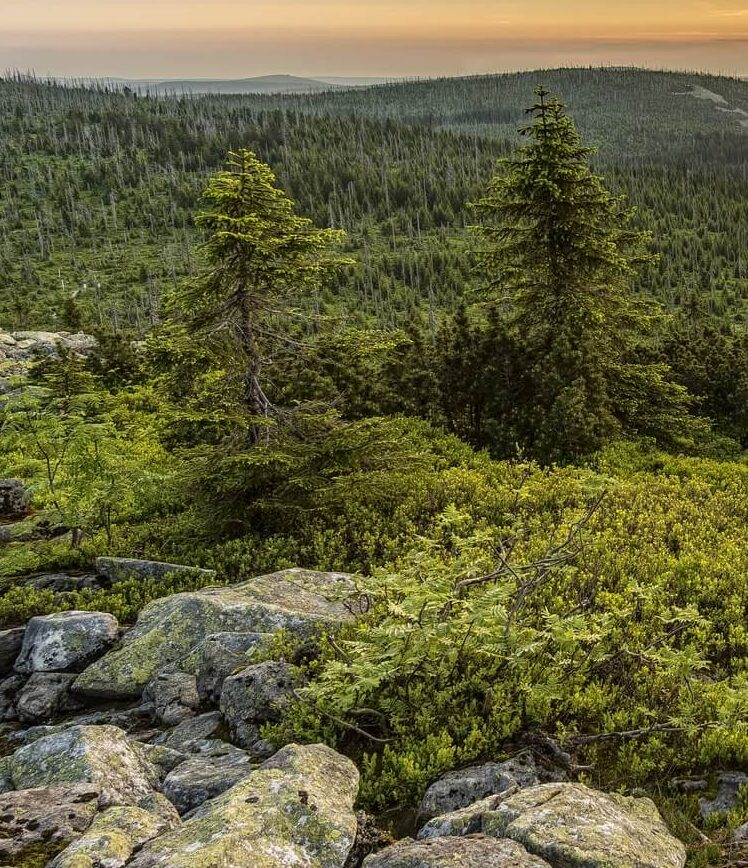 лес Изображение FelixMittermeier с сайта Pixabay