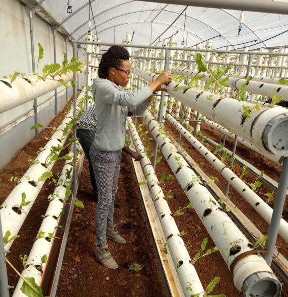 ООН продовольственная безопасность