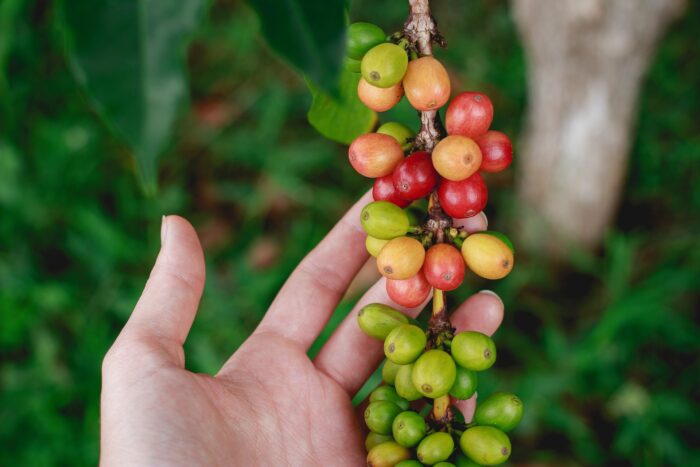 кофе и его история Изображение StockSnap с сайта Pixabay