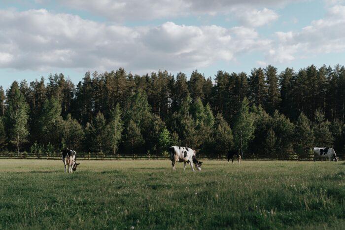 фермерский фестиваль СПб pexels-cottonbro