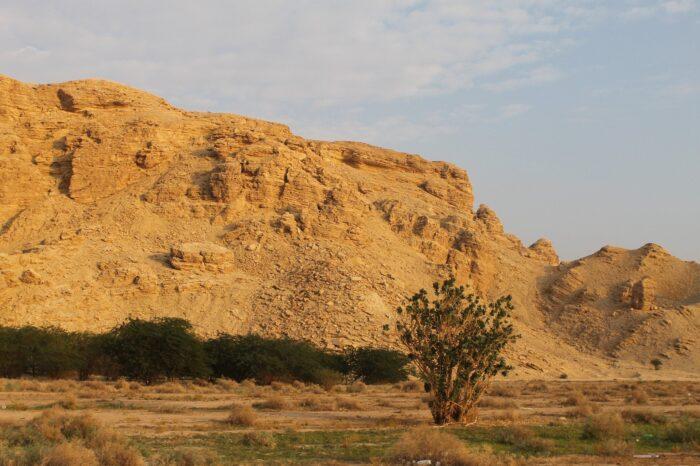 Аравийская Изображение Katherine Ab с сайта Pixabay