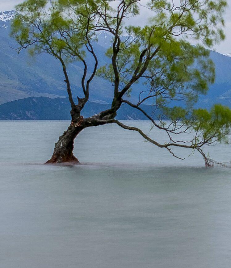 Затопленные леса Изображение Aneta Foubíková с сайта Pixabay