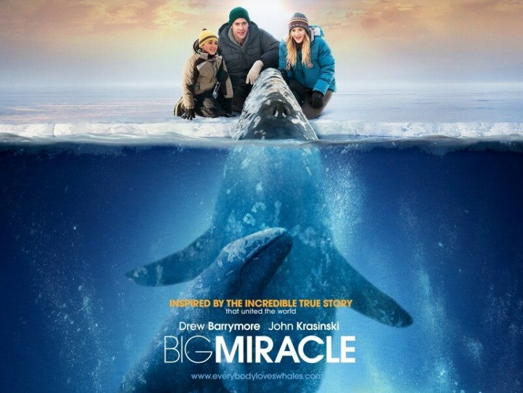 kinopoisk.ru-Big-Miracle-1794878--w--800 (1)