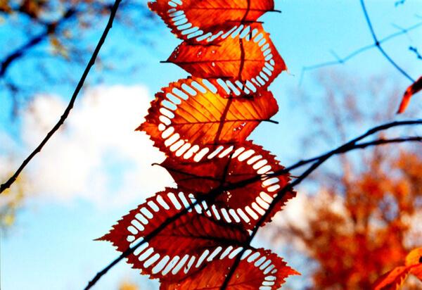 autumn-leaf5 (1)