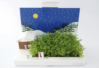 green-gift1.full (1)