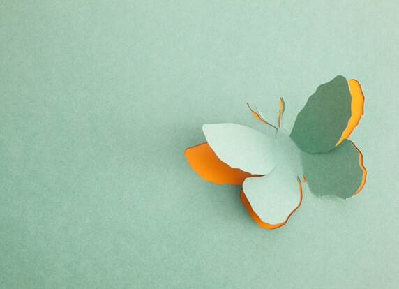 paper-butterfly.full (1)