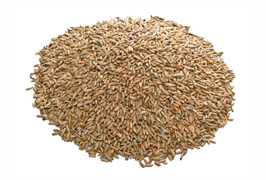 rye-grain