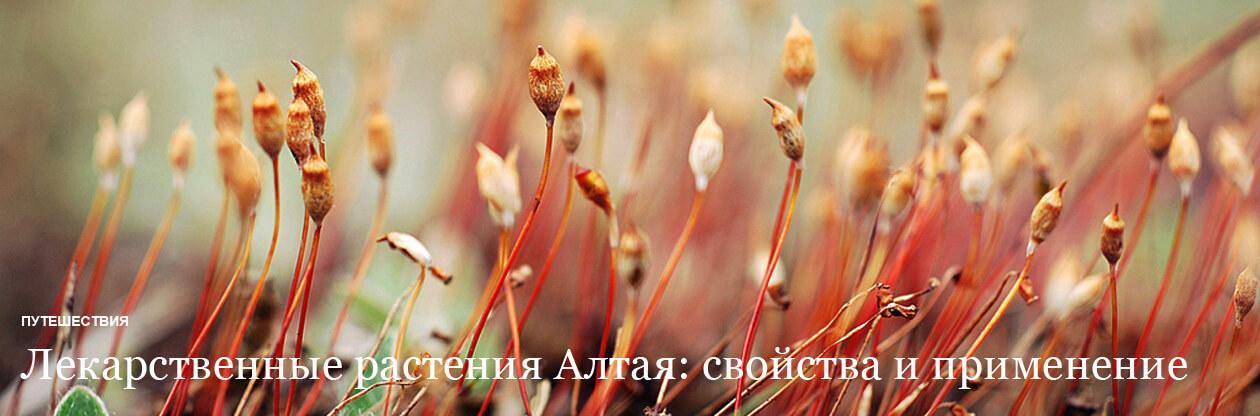 Лекарственные растения Алтая