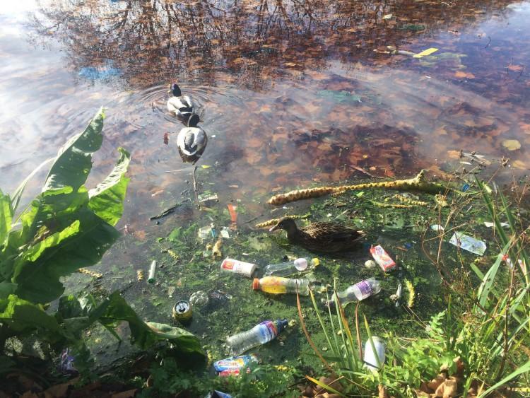 водоем и птицы с пластиком