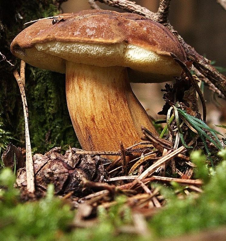 заставка грибы