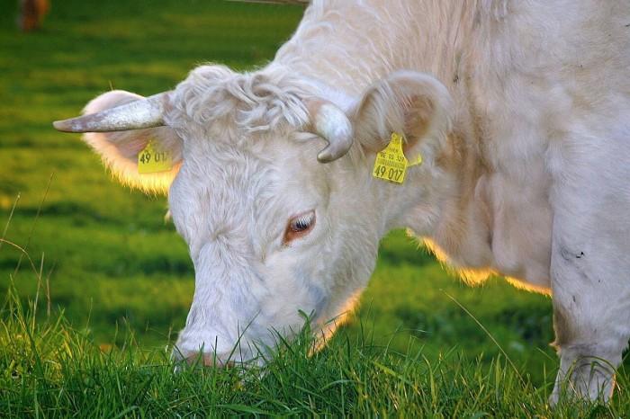 налог на мясо