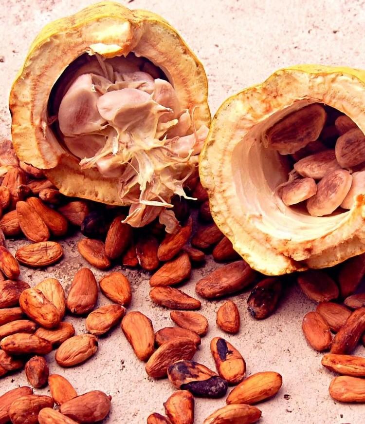 какао бобы 3