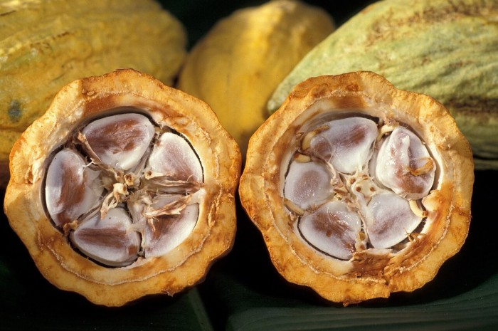 бобы какао внутри